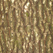 Stock Photo: Tree bark texture