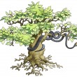 Stock Photo: Black mamba hidden on a tree.