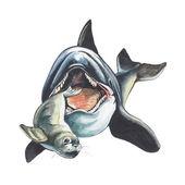 Baleia assassina — Foto Stock