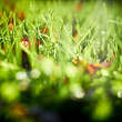 Stock Photo: Sunlit autumn grass, closeup shot.