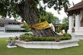 Tree in Wat Suwandararam Rajawaraviharn — Stock Photo