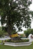 Träd i wat — Stockfoto