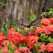 Butterfly on the bush — Stock Photo