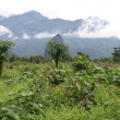 Countryside near Vang Vieng, Laos — Foto de Stock