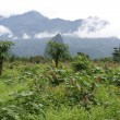 campagna vicino a vang vieng, laos — Foto Stock