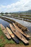 Rýže pole a čluny — Stock fotografie