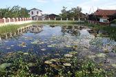 Teich mit lotus-blätter — Stockfoto