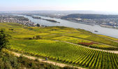 Ruedesheim vineyards — Stock Photo