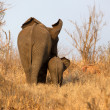 Elephant with Calf — Stock Photo