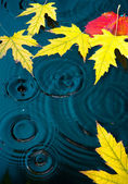 Abstract autumn background with maple yellow leaves — Stock Photo
