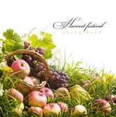 Abstract art autumn background with fruit on the grass — Foto de Stock