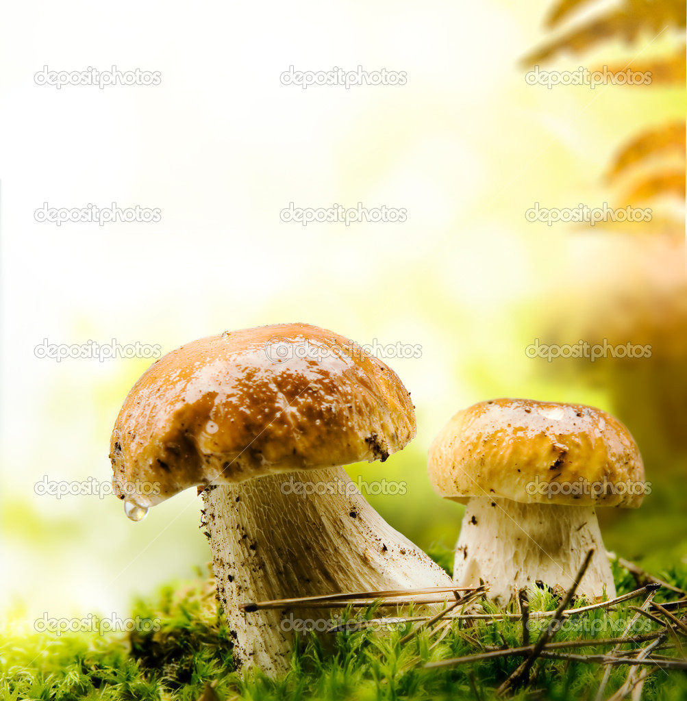 This autumn fungus is growing bel — Stock Photo #6896861