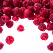Raspberries on white background — Stockfoto
