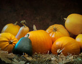 Orange gourd lying on the grass on dark background — Zdjęcie stockowe