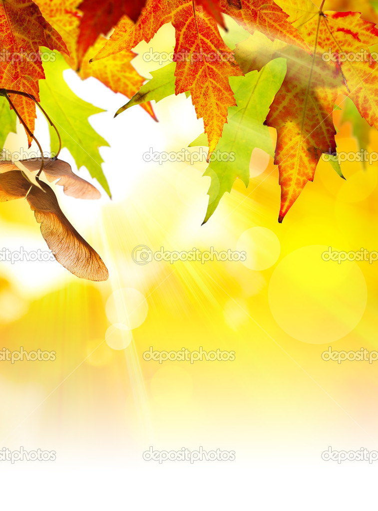 Autumn background with yellow leaves of autumn  tree lit by the sun  Stock Photo #7112586