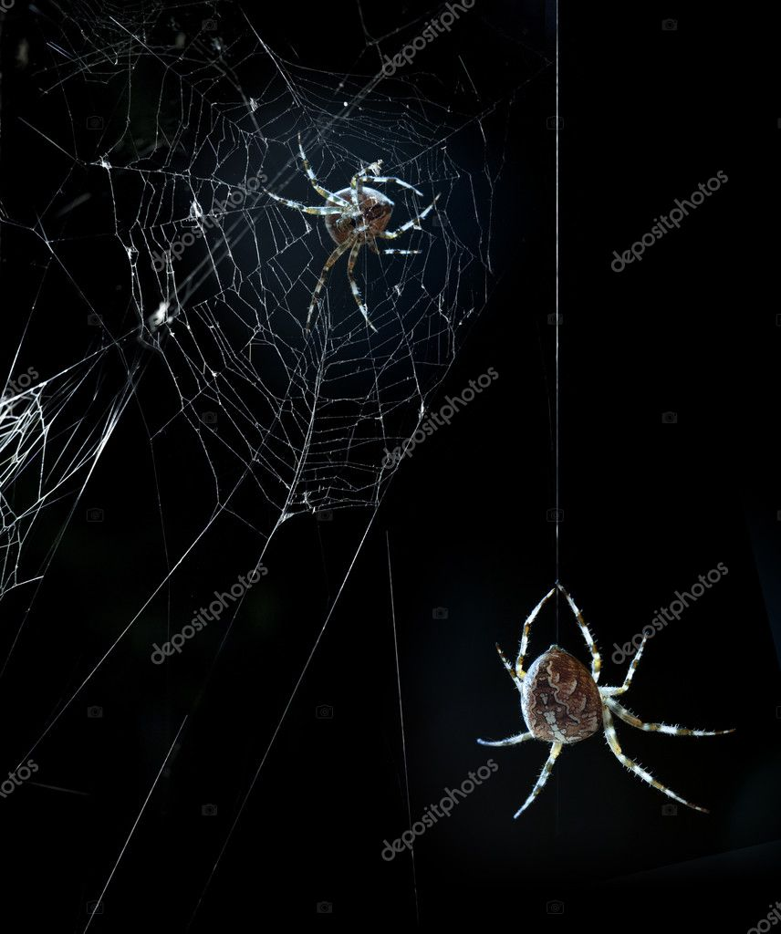 Party horrible spiders in Halloween night — Stock Photo #7145796