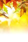 Konst abstrakt hösten bakgrund — Stockfoto
