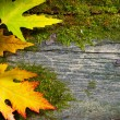 Art autumn leaves on the grunge old wood background - Stock Photo