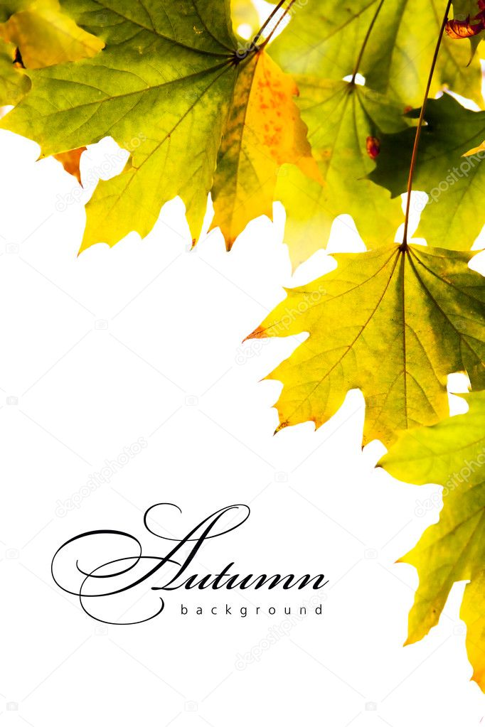 The real autumnal maple leaves light sunlight — Stock Photo #7274509