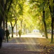 Autumn morning city alley - Stock Photo