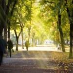Autumn morning city alley — Stock Photo