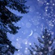 Snowy forest on Christmas night — Stock Photo