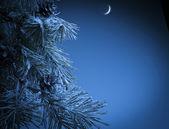 Christmas night — Stock Photo