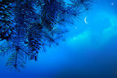 Art Christmas tree branch on a blue night sky background — Stock Photo