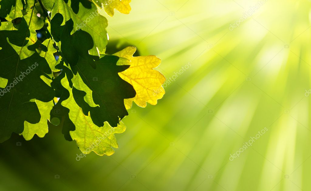 Art oak green leaves — Stock Photo #7527760