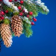 Photo: Branch of Christmas tree sheltered snow on blue background