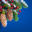 Branch of the Christmas tree sheltered snow  on blue background - 