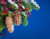 Branch of the Christmas tree sheltered snow on blue background — ストック写真