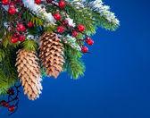 Ramo di albero di natale al riparo neve su sfondo blu — Foto Stock