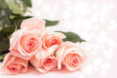 Rose on pink background — Stock Photo