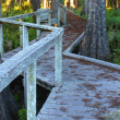 Swamp Boardwalk - Florida — Stockfoto