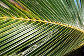 Palm Frond Background — Stock Photo