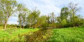 Flooded Wetland - Illinois — Stock Photo