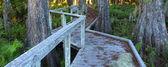 Swamp Boardwalk - Florida — Stock Photo