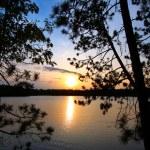 Pine Tree Sunset Silhouette — Stock Photo #7119222