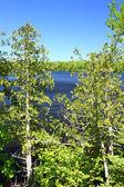 Little Horsehead Lake - Wisconsin — Stock Photo