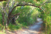 Everglades National Park Trail — Stock Photo