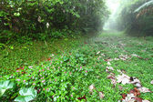 Rainforest Path - Puerto Rico — Stock Photo