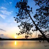 Pine Tree Sunset Silhouette — Stock Photo