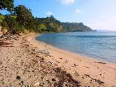 New Zealand Beach Scene — Stock Photo