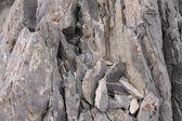 Nevada Rock Background — Stock Photo