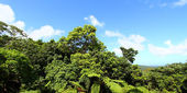 El Yunque National Forest — Stock Photo