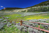 Bighorn National Forest Scenery — Stock Photo