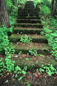 Kilbuck Bluffs Staircase - Illinois — Stock Photo