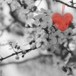 Red Heart — Foto Stock