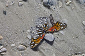 Butterfly in the Sand — Stock Photo